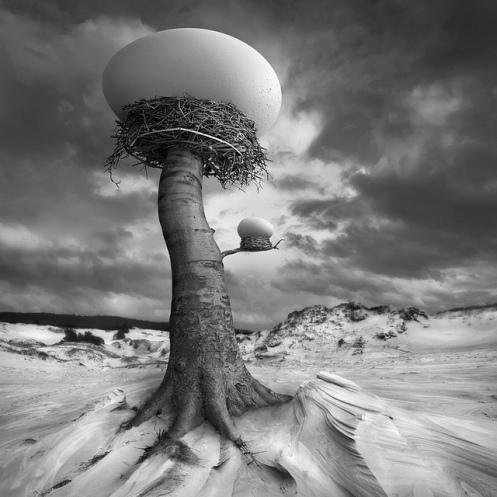 """D. Klimczak, """"The Nests"""", 2013"""