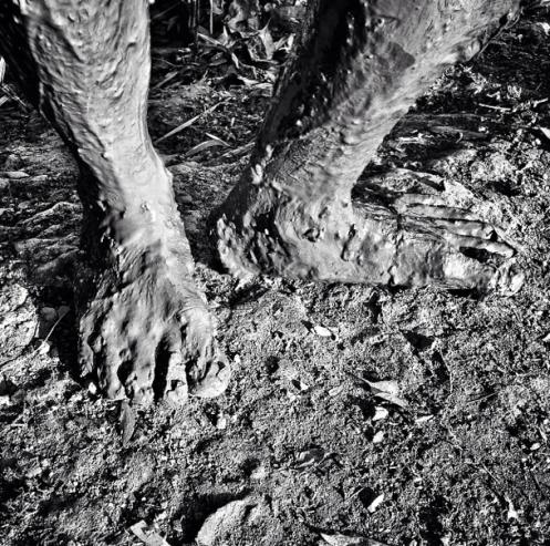 """David Guttenfelder, """"Very muddy feet. Vietnam's Mekong Delta"""", 2014"""