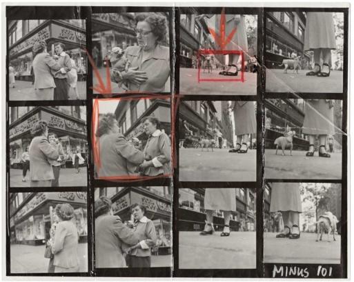 """E. Erwitt, provini di """"Chihuahua, New York City, 1946"""""""